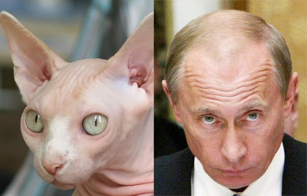 Kot i Putin
