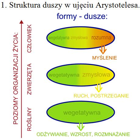 Struktura Duszy